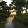 """A Sunny Path Ahead, Ft Hill"", photography by Anita Winstanley Roark.  Contact us for edition and size availability."